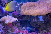 Meerwasser Bilder