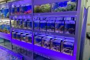 Aquarienblöcke Angebot